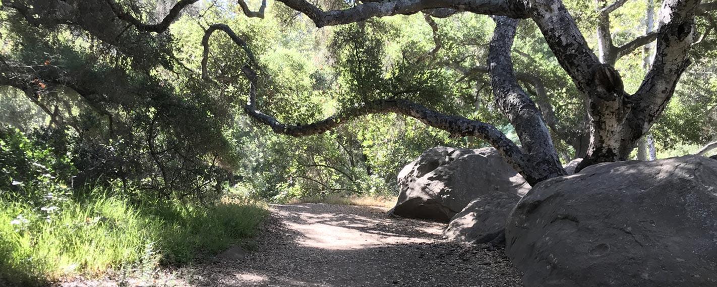 Pathway through Stevens Park